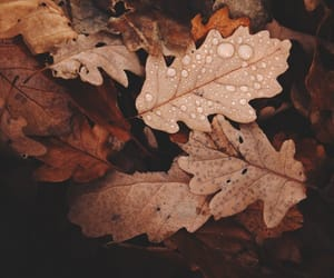 autumn, cold, and leafs image