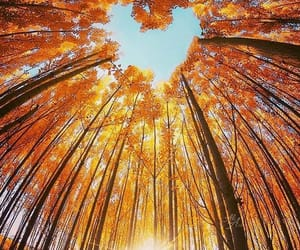 nature, autumn, and heart image