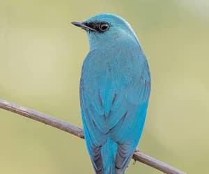 birds, bharat, and india image