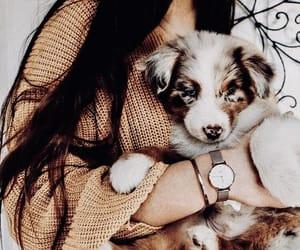 dog, animals, and girl image