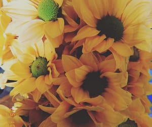 beautiful, love, and fiori image