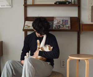 boy, aesthetic, and cat image