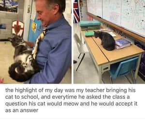 cat, meow, and school image