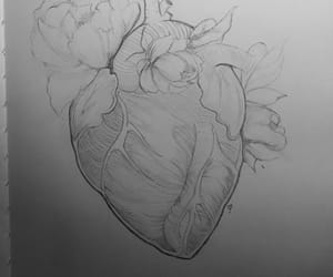 anatomical heart, anatomy, and art image