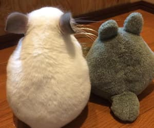 chinchila, totoro, and cute image