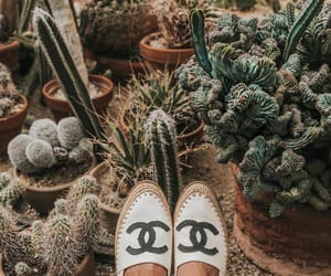 cactus, chanel, and mystyle image
