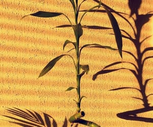 bamboo, shadow, and gold image