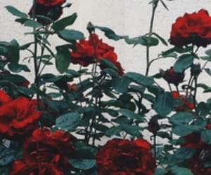 green, red, and roses image