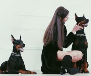 classy, dogs, and fashion image