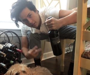 boys, dogs, and riverdale image