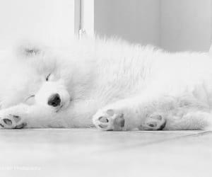 animal, dog, and white image