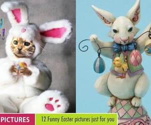 funny, funny pictures, and funny easter pictures image