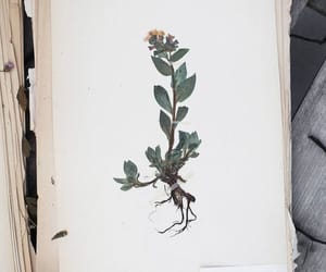 botanical, flowers, and journal image