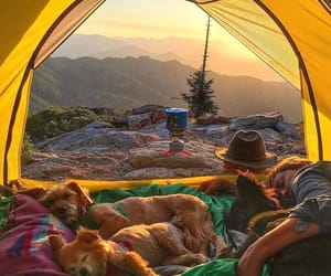 dog, camping, and travel image
