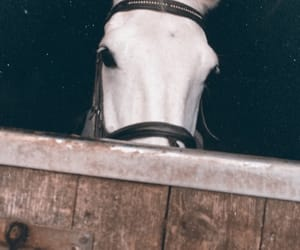 aesthetic, old, and saddle image