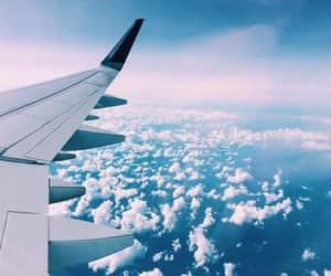airplane, animals, and paris image