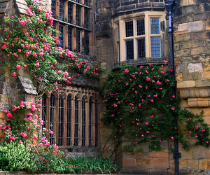building, flowers, and roses image