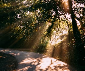 analog, foggy, and sunlight image