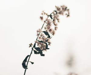 autumn, delicate, and floral image