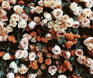 flowers, rose, and orange image