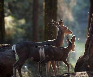 aesthetic, animal, and bambi image