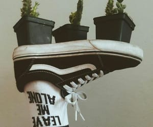 grunge, vans, and succulents image