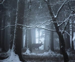 animal, snow, and florest image