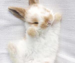 animal, pet, and bunny image