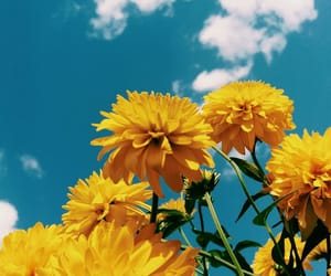 background, flowers, and sky image