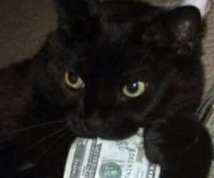 cat, money, and black image
