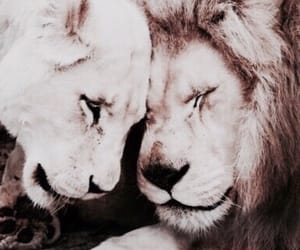 aesthetic, dark, and lions image