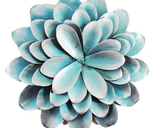 png, blue, and flower image