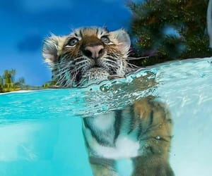 tiger, travel, and cuteanimals image