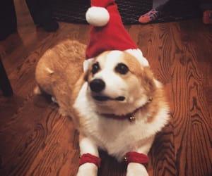 christmas and dog image