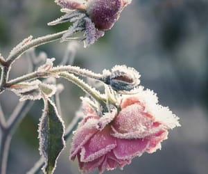 cold, flowers, and ice image