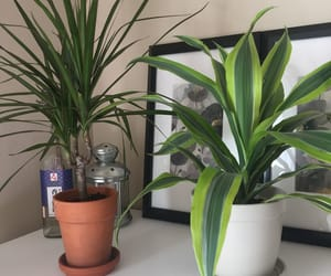 aesthetic, house, and plants image
