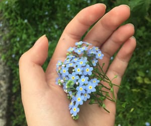 aesthetic, blue flowers, and bouquet image