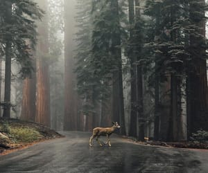 nature, forest, and deer image