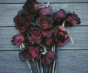 pic, cute, and roses image