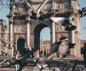 birds, cities, and explore image
