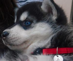 blue, dog, and photography image