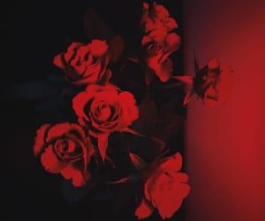 red, aesthetic, and roses image
