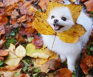 animals, dog, and puppy image
