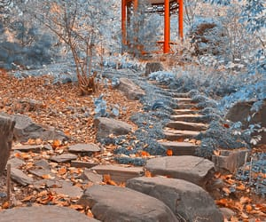 asian garden, autumn colors, and fallen leaves image