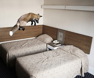 fox and bed image