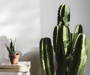 cactus, plants, and tumblr image