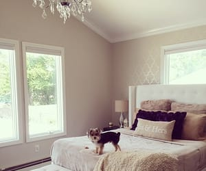aesthetic, home, and interior design image