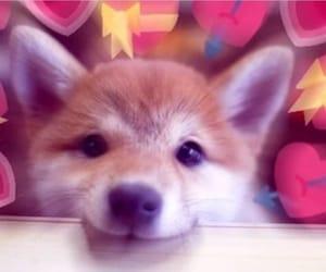 meme, reaction, and dog image