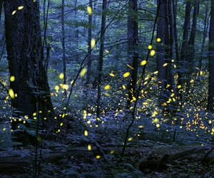 aesthetic, firefly, and insect image