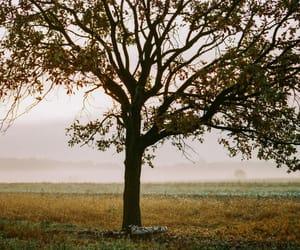 analog, Film Photography, and landscape image